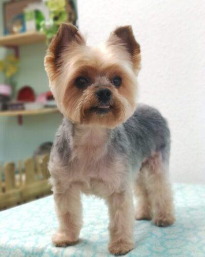 peluquería canina de bajo estrés Sopela Bizkaia